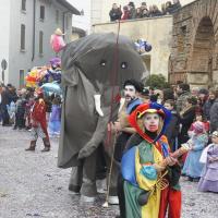 elefanti-circo-fantastico-010