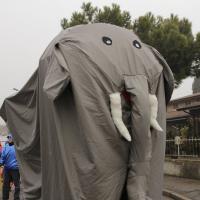 elefanti-circo-fantastico-022