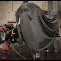 elefanti-circo-fantastico-031